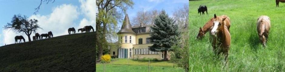 Albrechtshof Bendorf - Reitstall und Pferdepension